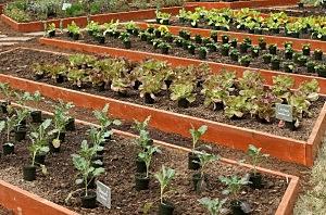 Michelle Obama Helps Plant Third White House Kitchen Garden