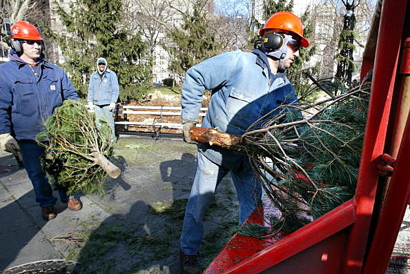 Christmas Tree Recyling Event