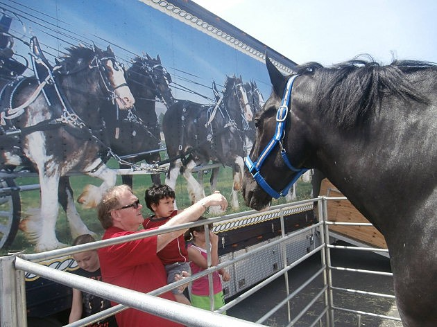 Meeting the Express Employment Clydesdales