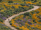 Sea Of Springtime Wildflowers Spreads Across Southern California